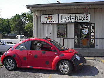 Ladybug's Flowers & Gifts in Tulsa - look for the ladybug!